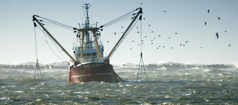 DIVIETO DI PESCA NELL'OCEANO ARTICO FINO AL 2033