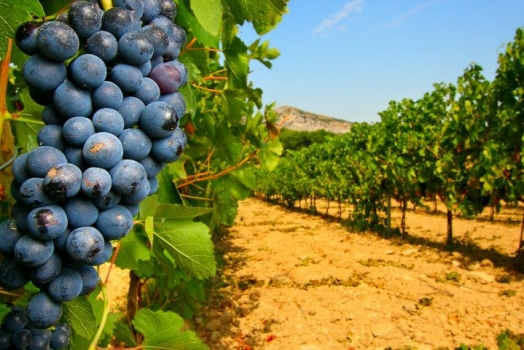 """COMUNICATO STAMPA-""""Italian Food & Wine"""""""
